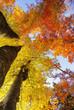 Herbstwald, Grenchenberg, Grenchen, Solothurn, Schweiz