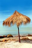 Lonely umbrella of reeds