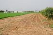 fattoria amish