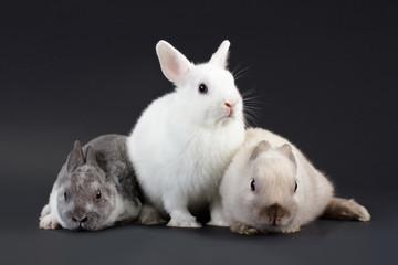 3 Rabbit baby