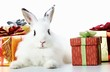 Rabbit and gifts