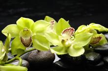 Concept de bien-être avec zen pierres et des orchidées