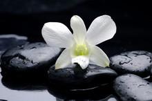 Macro d'orchidée sur la pierre avec des gouttes d'eau