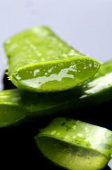 Sliced of aloe vera leaf