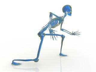 Mister Skeleton