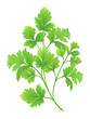 Parsley branch