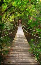 "Постер, картина, фотообои ""Bridge to the jungle,Khao Yai national park,Thailand"""