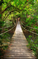 Bridge to the jungle,Khao Yai national park,Thailand © lkunl