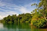 Fototapety A river flowing through a rainforest