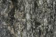 bark pattern.