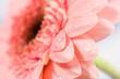 Fototapete Rot - Rosa - Blume