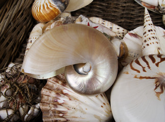 shells in a basket