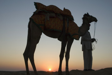 Camel Sunset