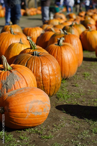 Pumpkin Patch and Shoppers