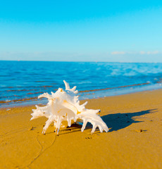 Beach Landscape Life