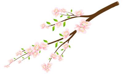 Цветущяя ветка яблони