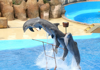 juming dolphins