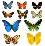 planche de papillons - Fine Art prints