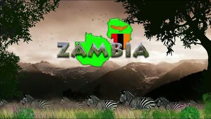 Manada de cebras: Zambia