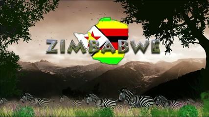 Manada de cebras: Zimbaue