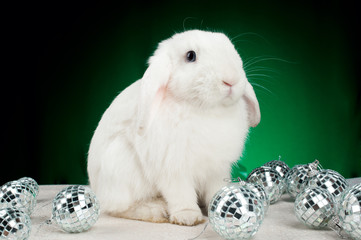 White christmas rabbit with decorations