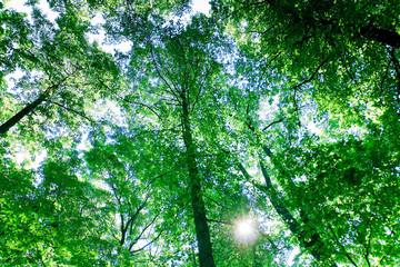 Sunshine Beauty Forest
