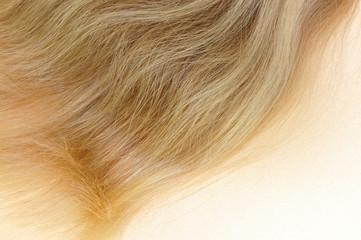 Haare, Konzept