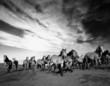 Fototapeten,pferd,wild,laufen,natur