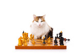 Longhaired housecat plays chess poster