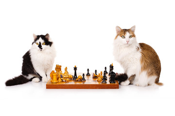 Two cats playing chess