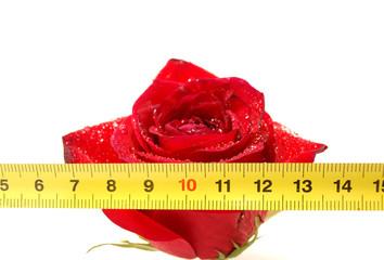 Rose and ruler