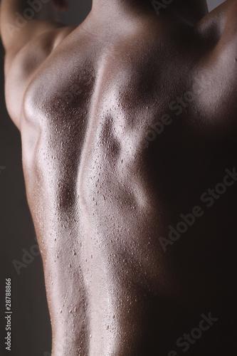 Fototapeta mokry - grzbiet - Tył / Pośladki