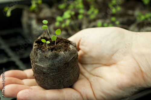 Holding the seedling