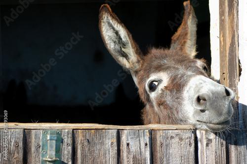 Fotobehang Ezel Funny Donkey