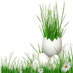 Herbes naturels detourés /sur fond blanc.
