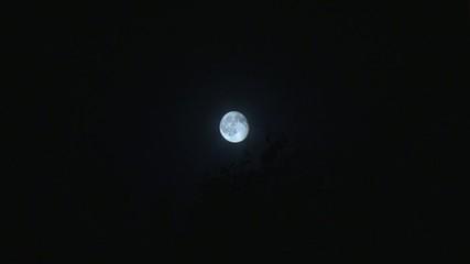 Mond mit Blättern_klein