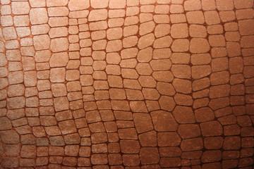 Snake  (python, boa) or crocodile leather skin imitation