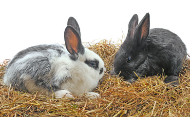 pair pretty rabbits