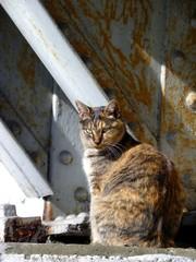橋脚の野良猫