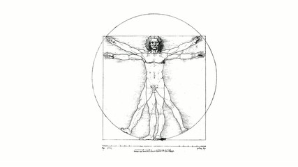 Vitruvian Man (DaVinci) spin swivel on white background