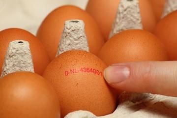 Kennzeichnung auf einem Bio-Ei