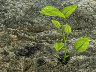 Un germoglio che cresce dalla roccia