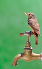 Pájaro cazando saltamontes.