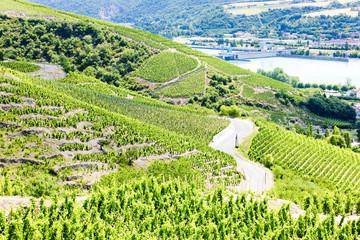 grand cru vineyards near Ampuis, Cote Rotie, Rhone-Alpes, France