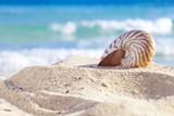 nautilus shell na pláži písek, proti mořských vln