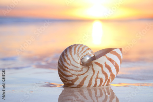 Leinwanddruck Bild nautilus shell in the sea , sunrise