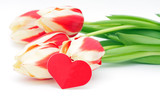 Tulips and heart on a white background