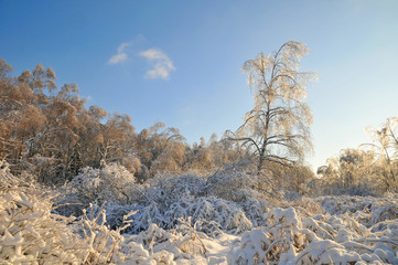 winter forest. frozen trees