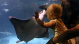 Baby Watching Sting Rays poster