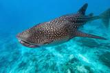 Fototapete Huge - Natur - Fische